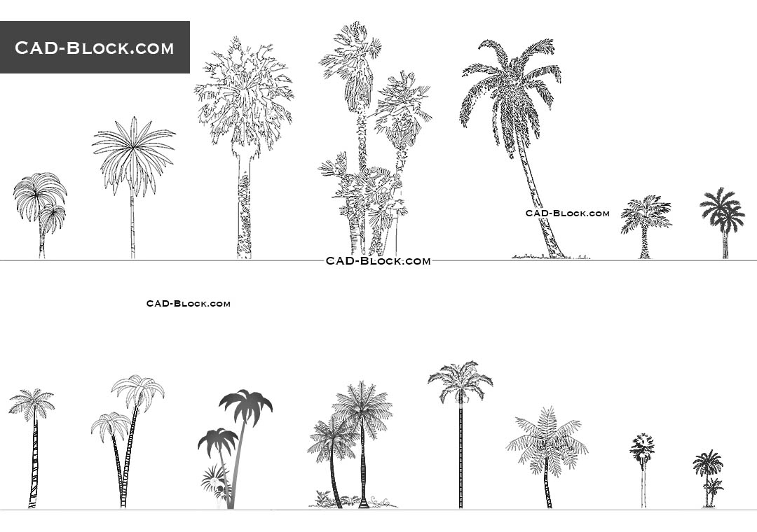 Plan And Elevation Of Trees : Palm trees cad blocks free download