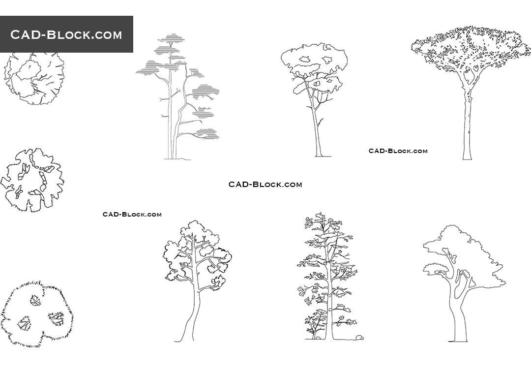 Pine Tree - CAD Blocks, AutoCAD file
