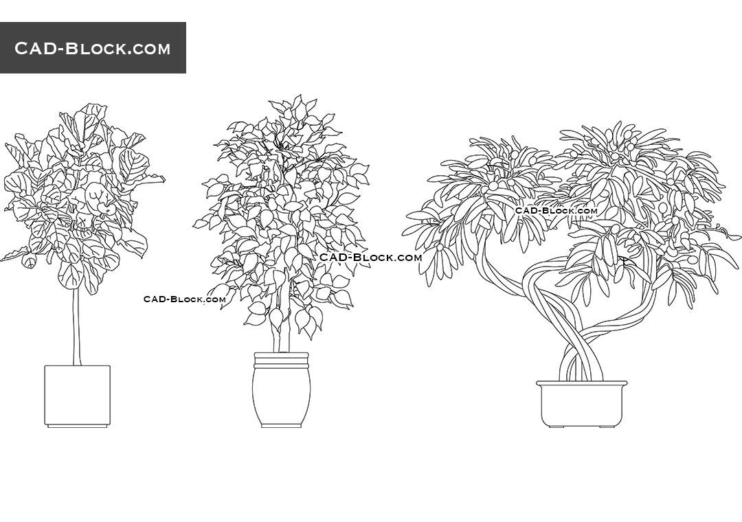 Indoor Tree   CAD Blocks, AutoCAD File