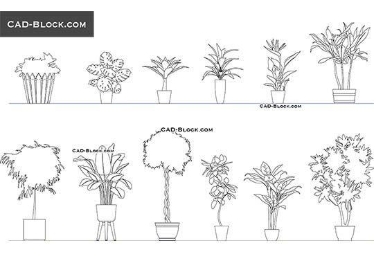 Indoor Plants buy AutoCAD Blocks